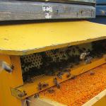 fábrica de residuos - colmenas