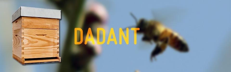 colmena dadant - Gumar